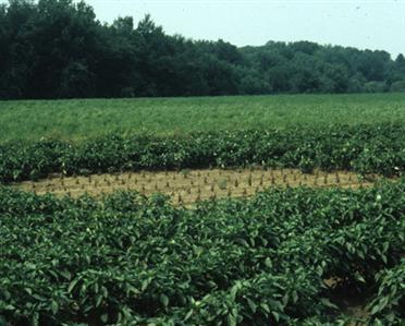 Αστραπές στην ζημιές καλλιεργούμενων